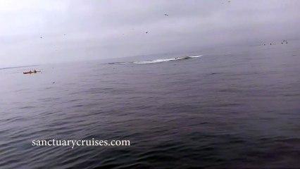 Une baleine atterrit sur des kayakers après son saut hors de l'eau