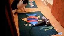 Lucu kucing✔ Lucu kucing video✔ Lucu kucing 2015 ✔lucu kucing video cobalah untuk tidak tertawa [Full Episode]