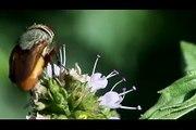 Une mante religieuse dévore la tête d'une mouche vivante... FLippant