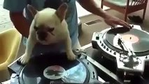 this dog has talent
