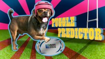 New Zealand v Argentina: Rugby World Cup 2015 - Puggle Predictor