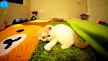 Funny animals✤Funny Cats Videos   Funny Videos Animals Remix Compilation   Funny Animal Videos