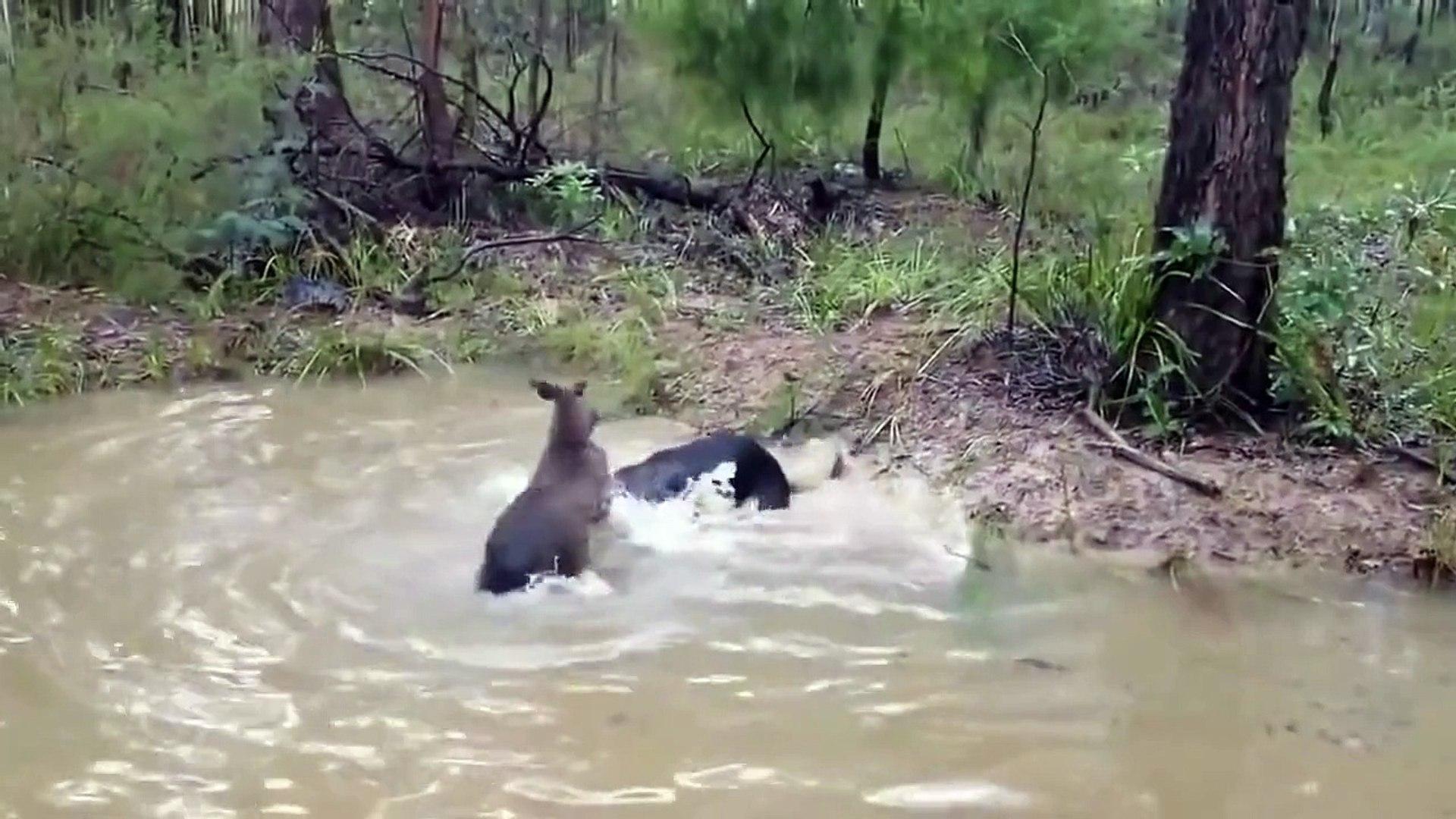 Охота, бой собаки с чупакаброй. Реальные кадры.