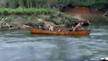 Un labrador courageux sauve deux chiens à la dérive