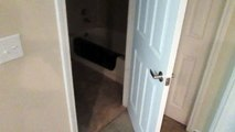 Ce chat est capable d'ouvrir des portes mêmes piégées !