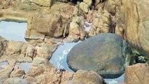 Un poulpe attaque par surprise un crabe