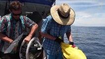 Des requins découverts dans un volcan sous-marin en activité