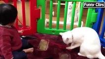 Drôle vidéo Drôle dAnimaux Drôles de bébés Compilation le meilleur pour 2015