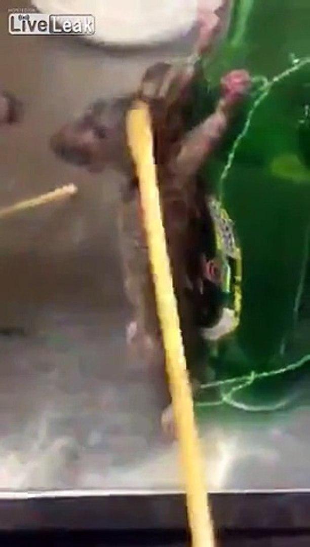 LiveLeak com - Chinese guy puts 2 rats on trial