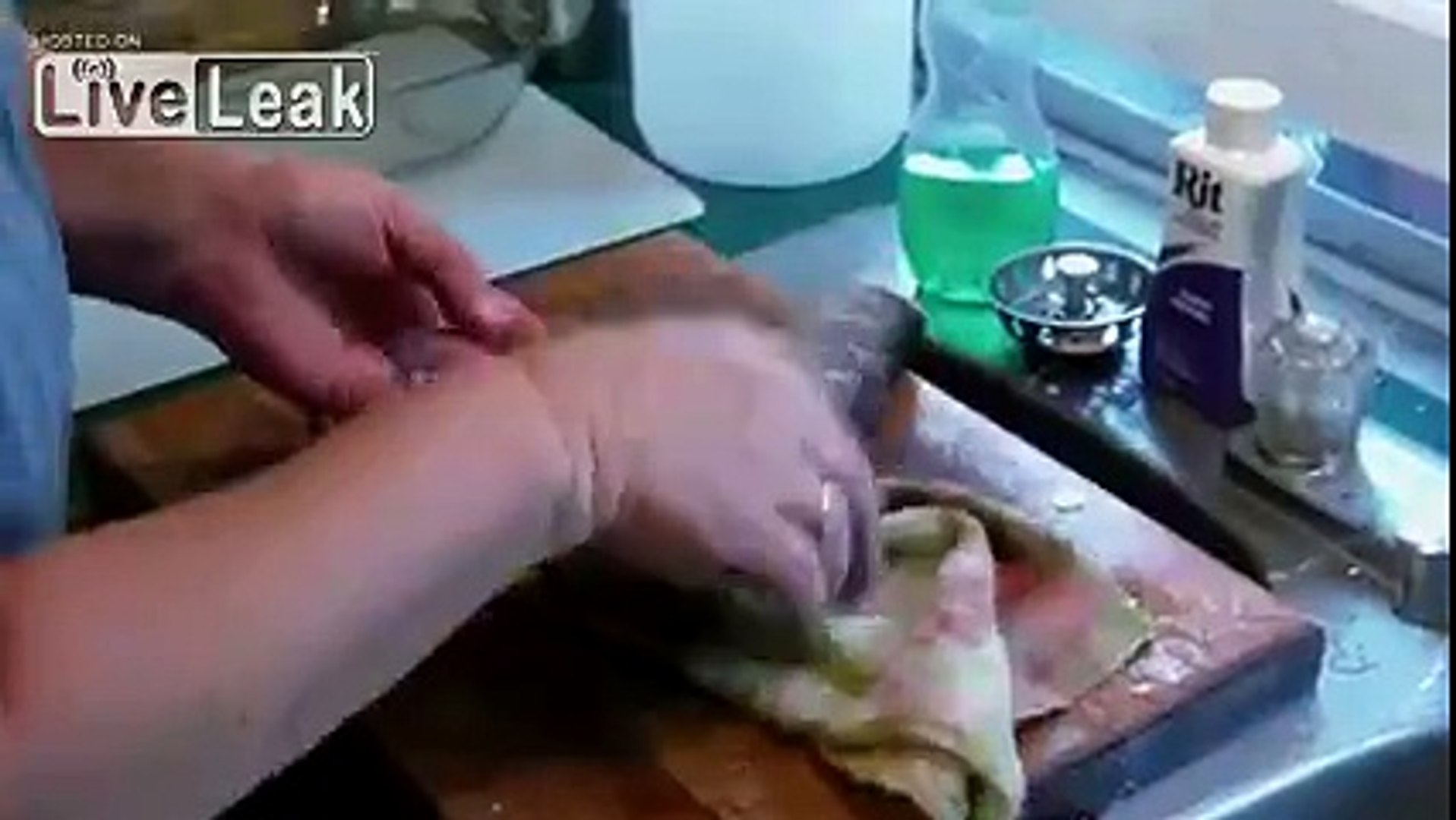 LiveLeak com - Gutted and Beheaded Fish Fights Back - video