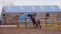 Lame Jump Mr Horse