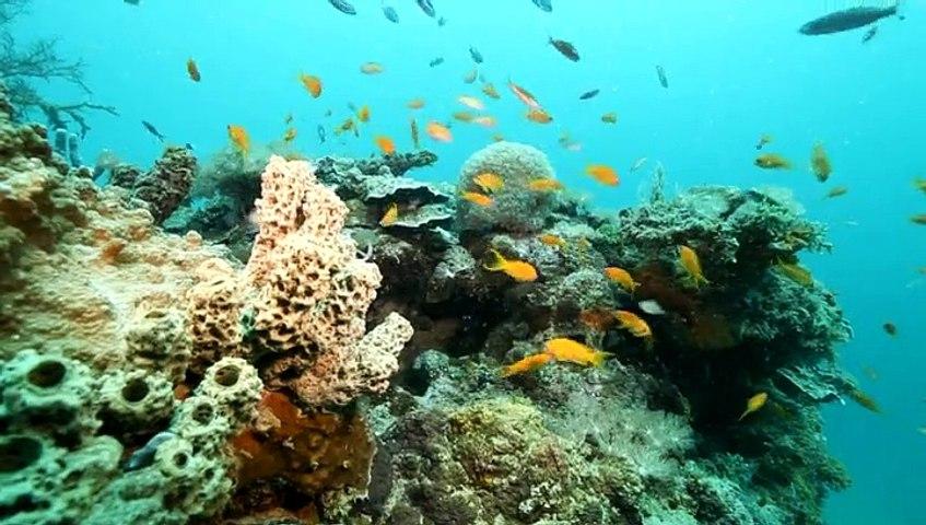 Karani, un agent investi au coeur du Parc naturel marin de Mayotte