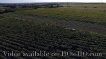 Vendange à la main en Anjou vu par drone, Rochefort sur Loire, Pays de La Loire, France (4)