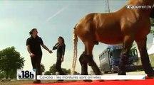 Cavalia débarque à Bruxelles
