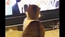 Lucu Kucing Video Cobalah untuk Tidak Tertawa Yang Membuat anda Tertawa begitu Keras [Full Episode]