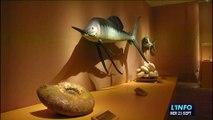 Exposition des dinosaures au Musée Vert (Le Mans)