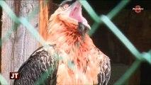 Lignes électriques: Protéger les oiseaux (Sixt-Fer-à-Cheval)