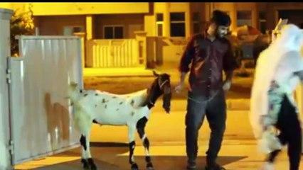 Pakistani Larkiyan Aur Bakra, Before And After Eid – Watch An Interesting Video
