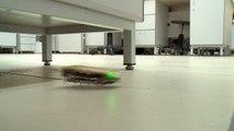 El futuro de las prótesis está en esta cucaracha-robot