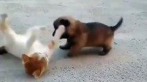 Tatlılıkta Sınır Tanımayan Kedi Yavrusu ile Köpek Yavrusu..