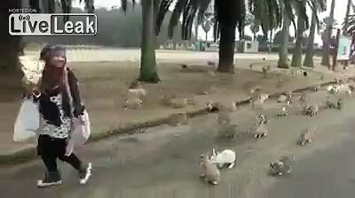 Rabbits chasing girl…