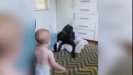 Baby Steals Great Dane's Bed