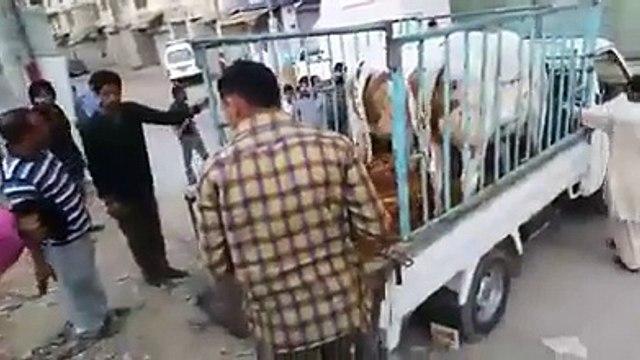 two cows run away | two cows run away in pakistan before sacrifice