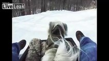 Dogs and Sleds