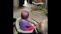 Quand bébé pique le panier du chien.. Le chien n'est pas content