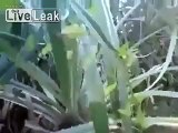 LiveLeak.com - wooowww ... what happened here .. ???