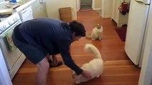 Ce chat adore passer sa journée à glisser sur le sol de la cuisine.