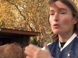 Le polocrosse : un jeu à cheval avec une raquette pour démocratiser le polo