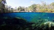 Plongée Cenotes II
