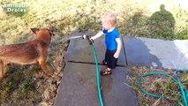 Heureux Chiens et Bébés jouant avec tuyau deau plus heureux Vidéo jamais!