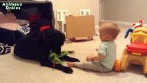 Bébés mignons jouant avec Chiens Labrador Chiens Amour Bébés Compilation [HD VIDEO]