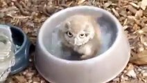 So adorable owl taking a bath is just so cute