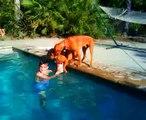 Il Cane Che Si Preoccupa Per Il Suo Padrone