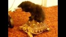 En yeni komik kediler  -) ☆ Komedi ve Eğlence izle (video)  ツ