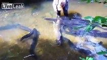 Woman Spoon Feeding Eels In A Stream.