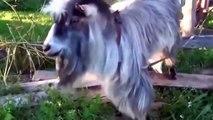 HD kalite en komik hayvan videoları ☆ Komedi ve Eğlence izle (video)  ツ