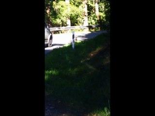 Un chien se promène dans le bois d'Hussigny