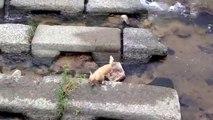 Un chien joue à la balle avec une rivière