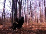 REAL BIGFOOT FOOTAGE FROM TEXAS