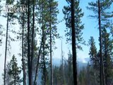 LiveLeak.com - USFS CREW SETTING A BACK FIRE AND HELICOPTERS DOING BUCKET DROPS ON FOREST FIRES