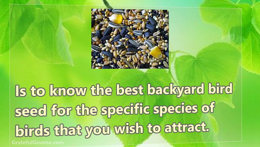 5 Keys To Choosing The Best Backyard Bird Seed