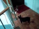 Küçük nija kedi  -) Çok komik komedi şaka ☆ Komedi ve Eğlence izle (video)  ツ