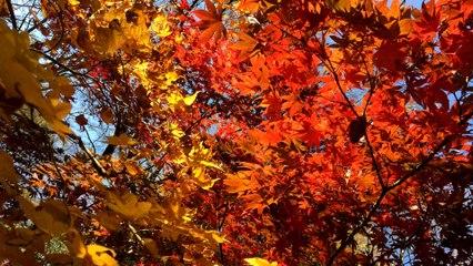 Couleur d'automne près de la Tokyo Tower