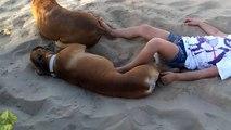 Elle dérange son chien pendant sa sieste mais va le regretter !