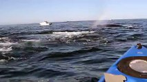 LiveLeak.com - Kayaker Is Surrounded by Whales