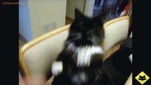 FUNNY CAST - Funny Cats - Funny Cat Videos - Funny Animals Cute Pets LOL